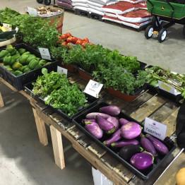 FarmShare-CSA-Week 3-1200x900_1215-004_1
