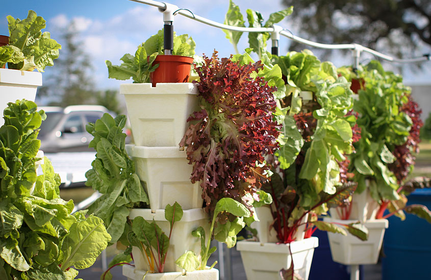 Hydroponic Garden at the Urban Farming Institute's Community Gardens.