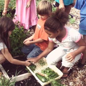schools-in-garden