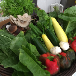 FarmShare-Adventure-CSA-Week4_1215-002
